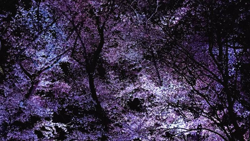 【社内イベント】来年はお花見したいですね!